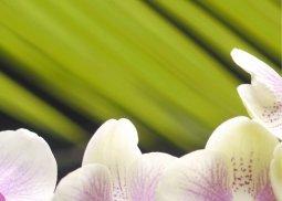 Панно Береза-керамика Азалия Орхидея 2 фисташковый 25x35