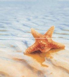 Панно Ceradim Starfish Dec Starfish Panno 1 50x45